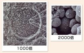 珪藻土2000倍写真