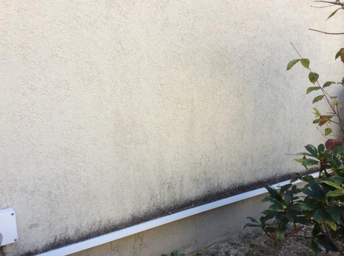 塗壁にカビ