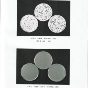 白癬菌試験画像