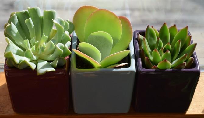foliage-plant-1